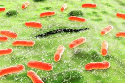 E coli гемолитические - что это и как с этим жить