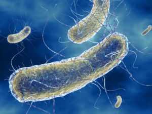 Особенности E coli
