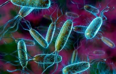 Кишечная палочка – бактерия Е. coli – причины и симптомы