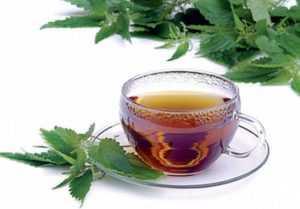 Чай из корня крапивы