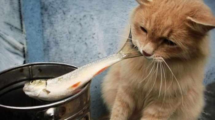 Описторхоз у кошек: