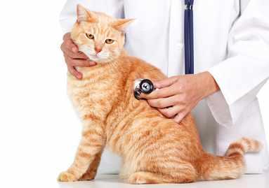 Когда кормить кота после таблетки от глистов