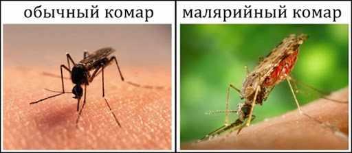 Медикаментозное лечение малярии