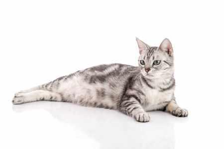 Можно ли давать таблетки от глистов беременной кошке