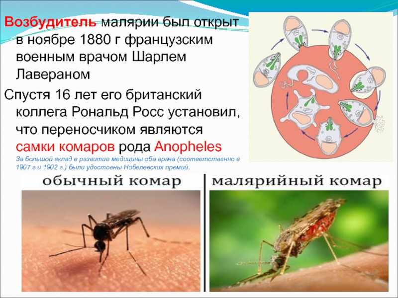 Как передается малярия