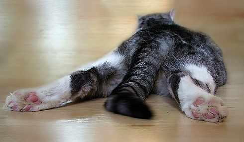 Длинные глисты у кошки