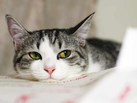 Виды глистов у кошек: фото и описание