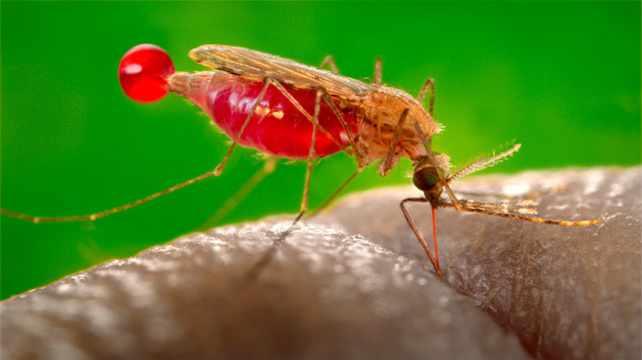 Разработка вакцин от малярии