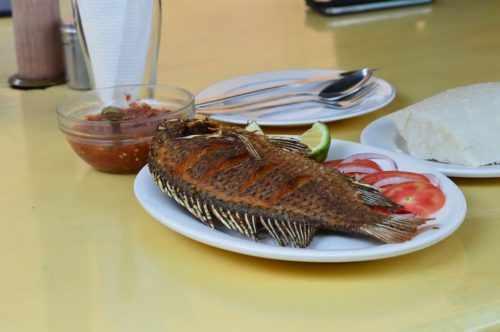 Как обработать рыбу от описторхоза