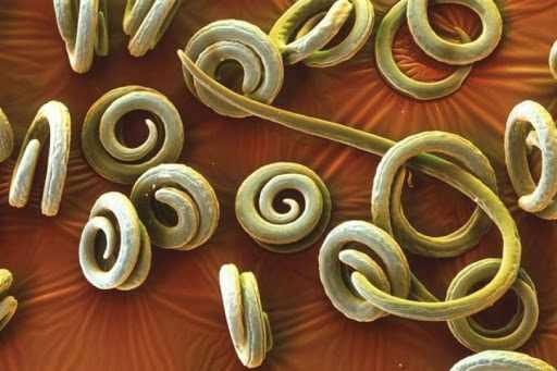 Контагиозные гельминтозы