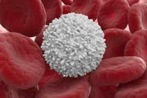 лейкоциты