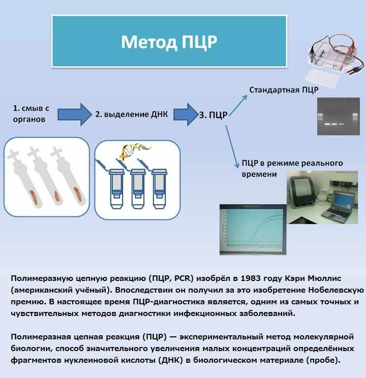 Метод полимеразной цепной реакции