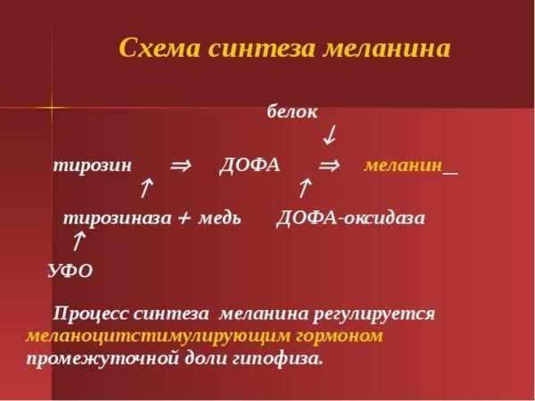 Схема синтеза меланина