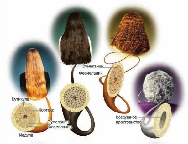 Пигмент в волосах