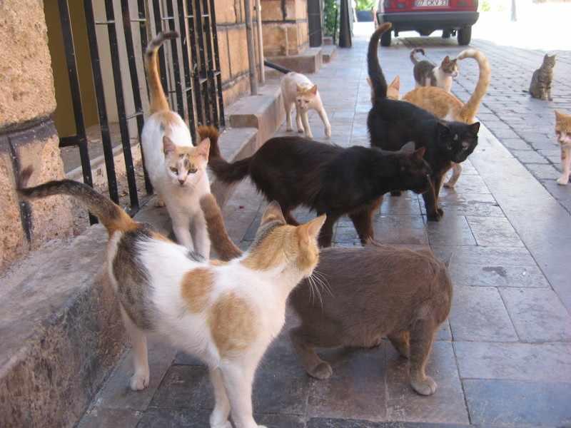 Бездомные коты наиболее вероятные источники лишая