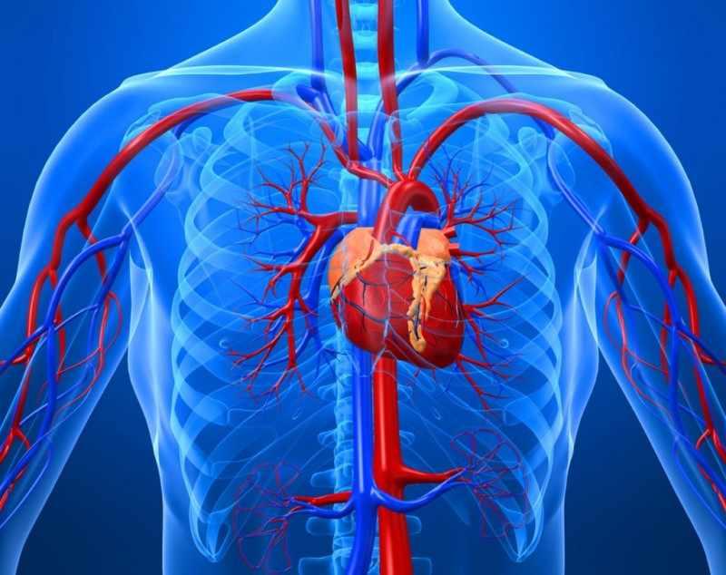 Страдающие от сердечно-сосудистых заболеваний