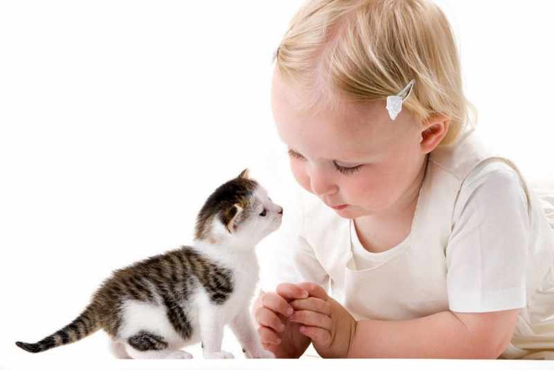 Дети и котята наиболее подвержены заболеванию лишаем из-за несформировавшегося иммунитета