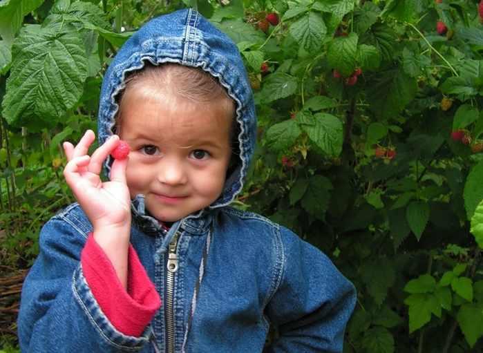 Ребенку дается небольшое количество продукта, кусочек фрукта или одна ягодка