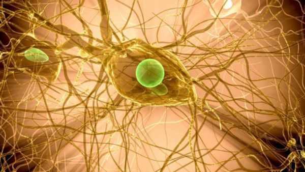 Вирус герпеса внутри нейрона