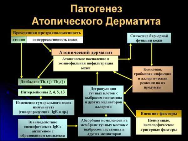Патогенез атопического дерматита