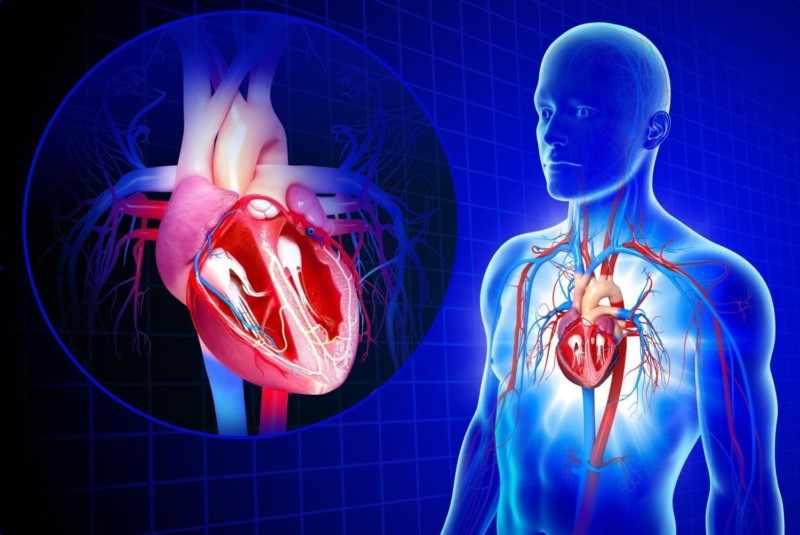 Болезни органов сердечно-сосудистой системы